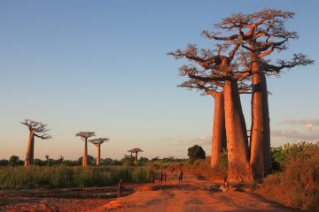 Madagascar A Lost World