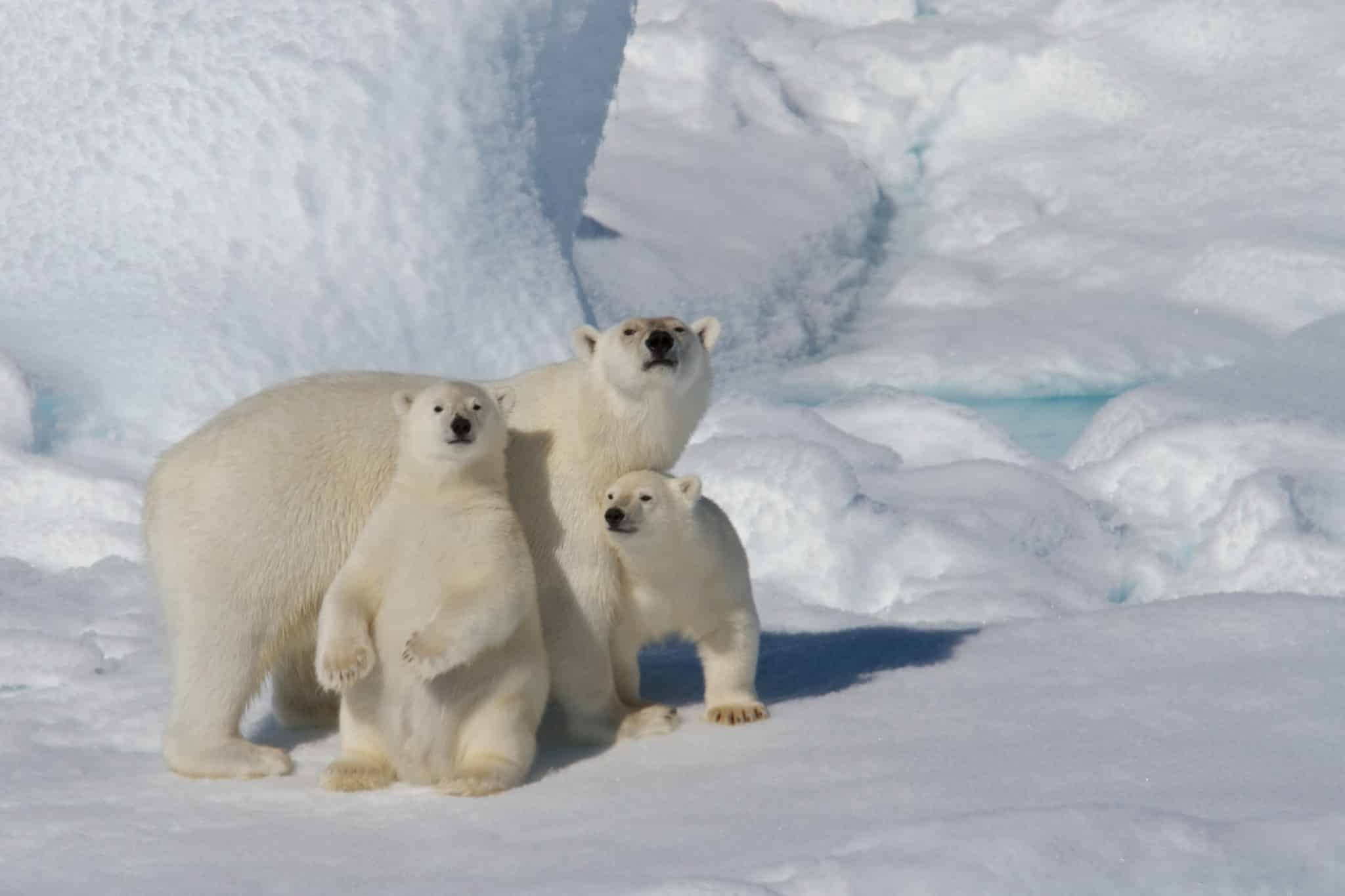 Svalbard Explorer & Wildlife Adventure