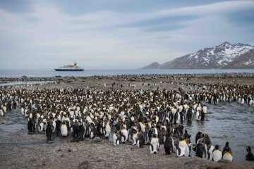 Antarctica, South Georgia & Falkland Islands