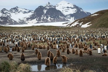 Falkland Islands, South Georgia & Antarctica