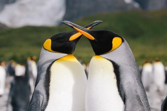 Falkland, South Georgia & Antarctica