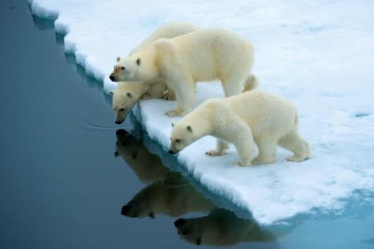 Svalbard Adventure
