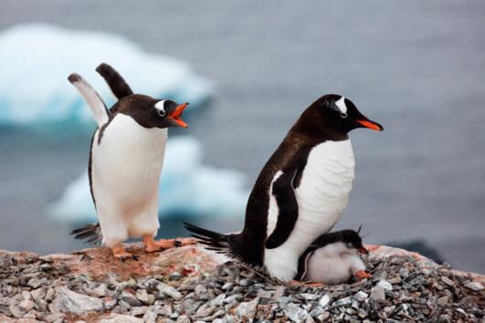 Antarctic Peninsula - Christmas in Antarctica