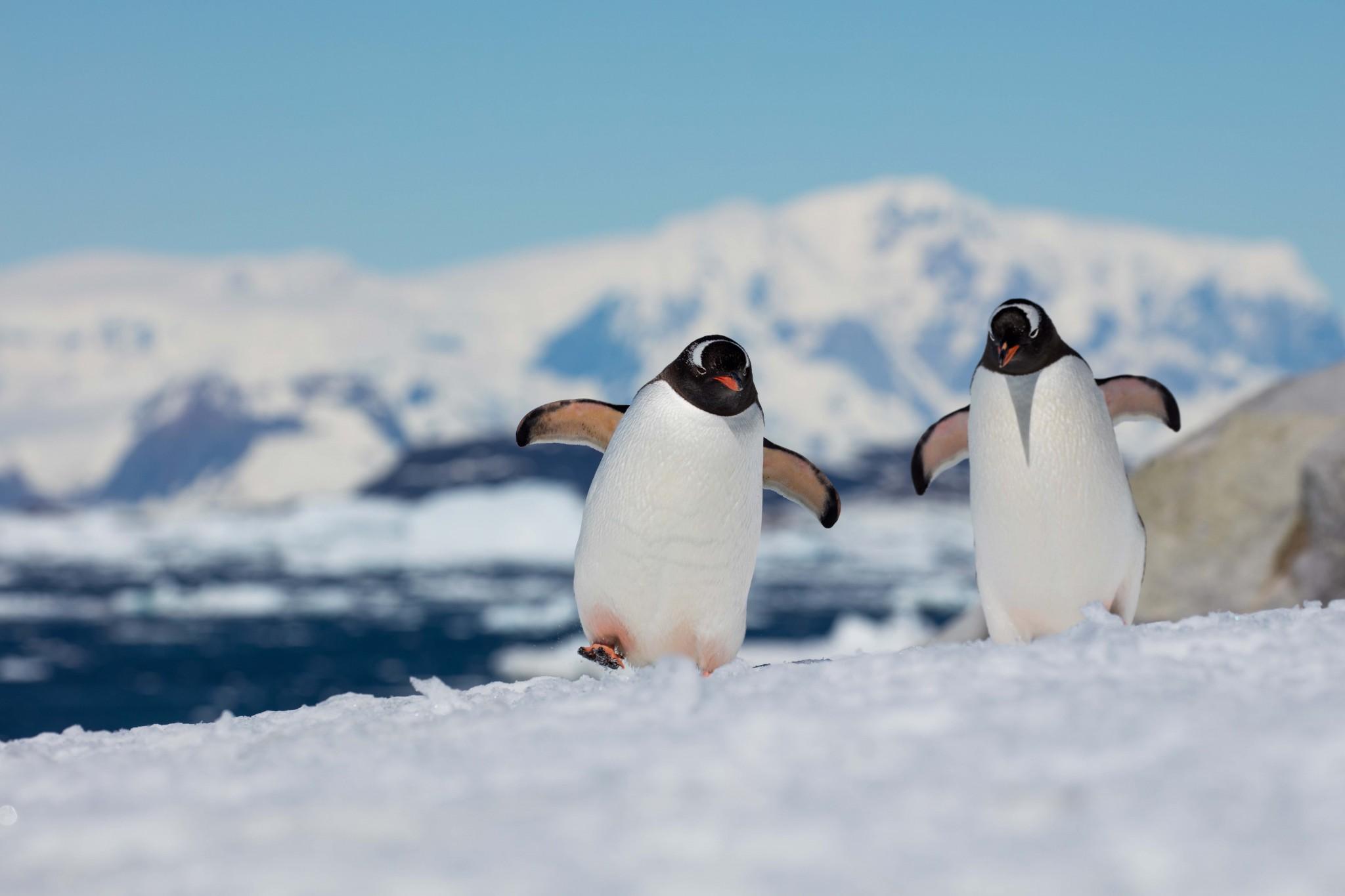 Antarctic Peninsula –  Land of Penguins & Icebergs