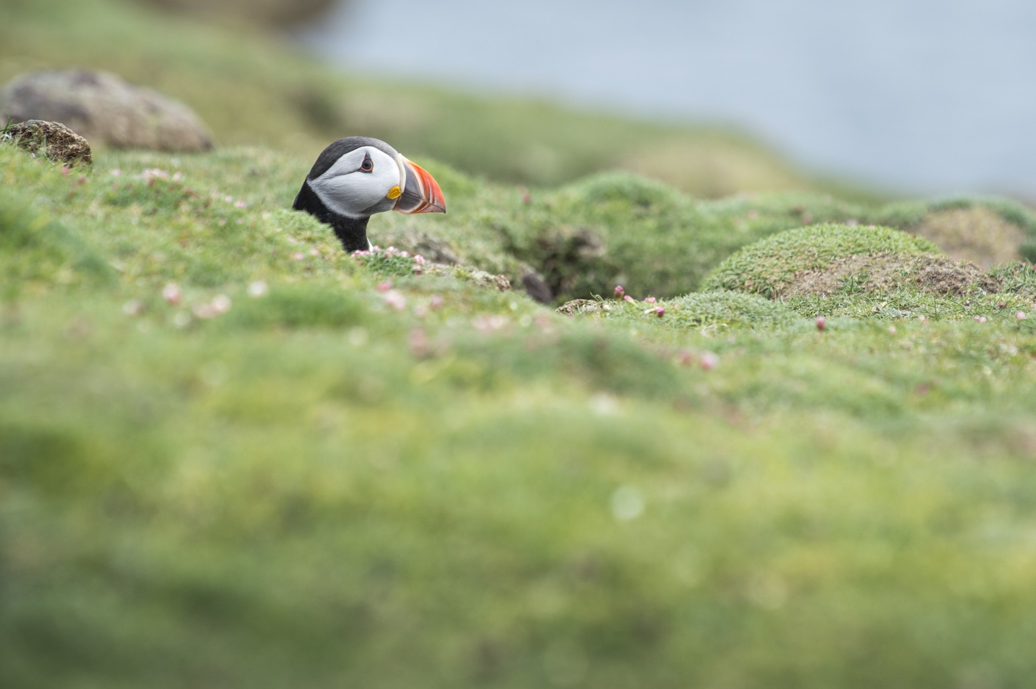 Scotland, Faroes, Jan Mayen & Svalbard