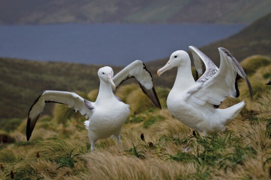 New Zealand's Wildest Islands